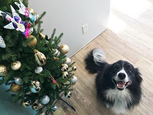 ひろ動物病院のクリスマス