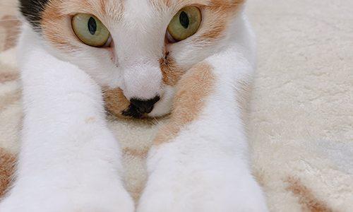 ネコちゃんもフィラリア予防